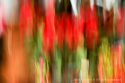 Painted Red Tulips