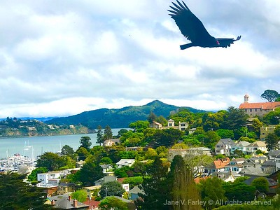 Hills of Sausalito