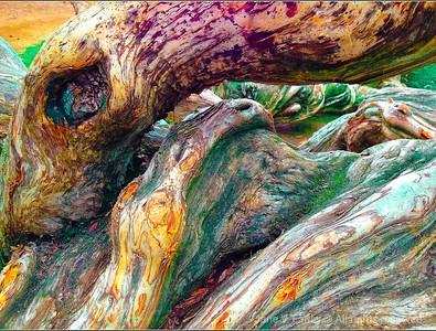 Tree vibrancy