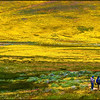 Flowery hills