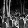 Forgotten shadows (Powazki Jewish Cemetery, Warsaw, Poland, 2008)