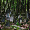 Forest of forgotten tombstones (Powazki Jewish Cemetery, Warsaw, Poland)