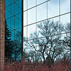 Glass, elms, and dogwood (University of Alberta, Edmonton, Alberta, Canada)