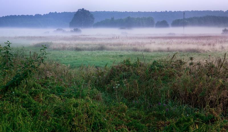Morning meadow (Ryki, Poland, 2009)