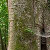 Forest column (Costa Rica, 2010)