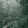 Cloud forest trail (Costa Rica, 2010)