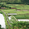 Rice fields (Kauai, 2010)