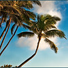Kihei palms (Maui; photo by Alina Gortel, 2010)