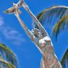 ... to freedom (Puerto Vallarta, 2010)