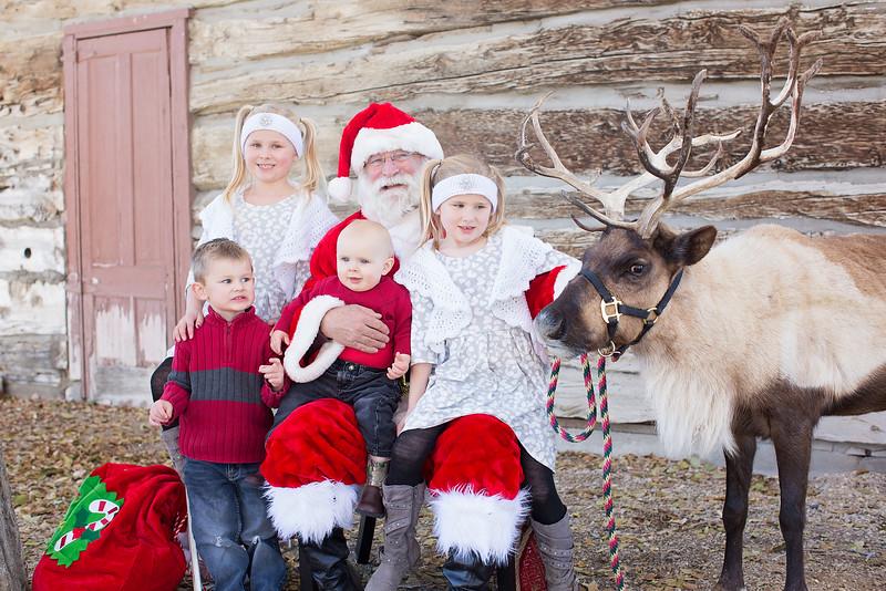 Reindeer-148