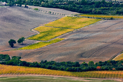 Fall colours of soil and vines.