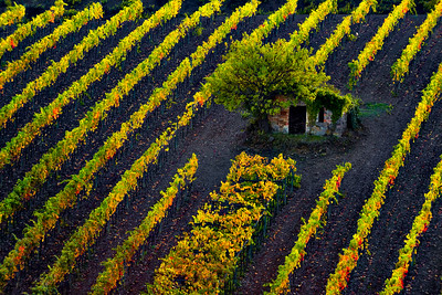 Fall colours of Brunello