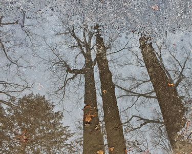 """Puddle Trees"" (photography) by Daria Nawrocki"