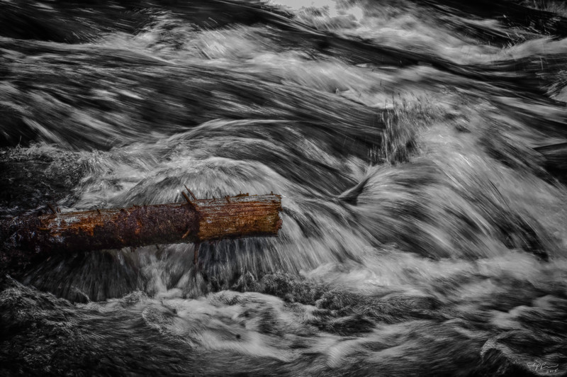 """""""Log in the River"""" (photography) by Chip Perone"""