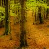 Aspromonte woods