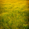 Vallefiorita - Flowery valley