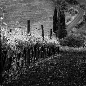 Vineyard and the road