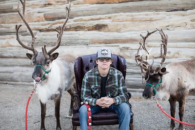 Reindeer-467