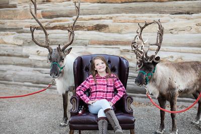 Reindeer-470