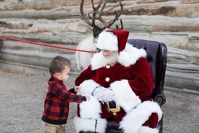 Reindeer-488
