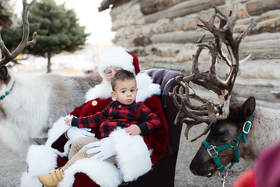 Reindeer-474