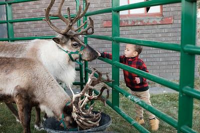 Reindeer-502