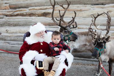 Reindeer-477