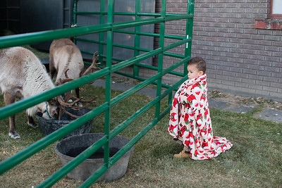 Reindeer-505