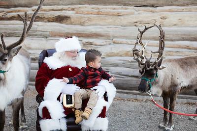 Reindeer-473