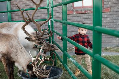 Reindeer-504