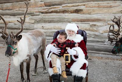 Reindeer-493