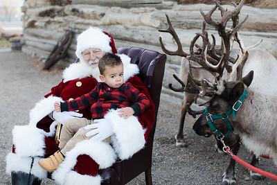 Reindeer-476
