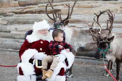 Reindeer-478