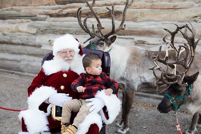 Reindeer-479