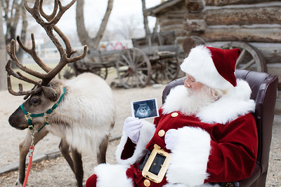 Reindeer-29