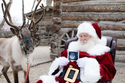 Reindeer-28