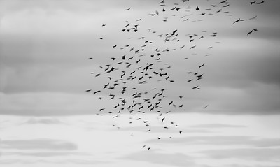 Free like birds
