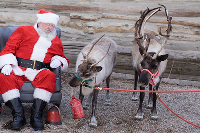Reindeer-208