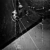 Spider Globe