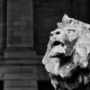 Majestic Lion Statue