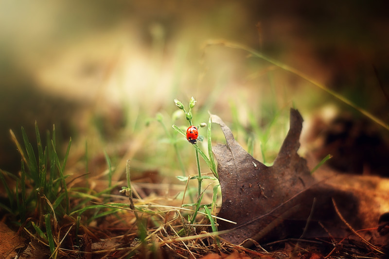 Enchanted Nature