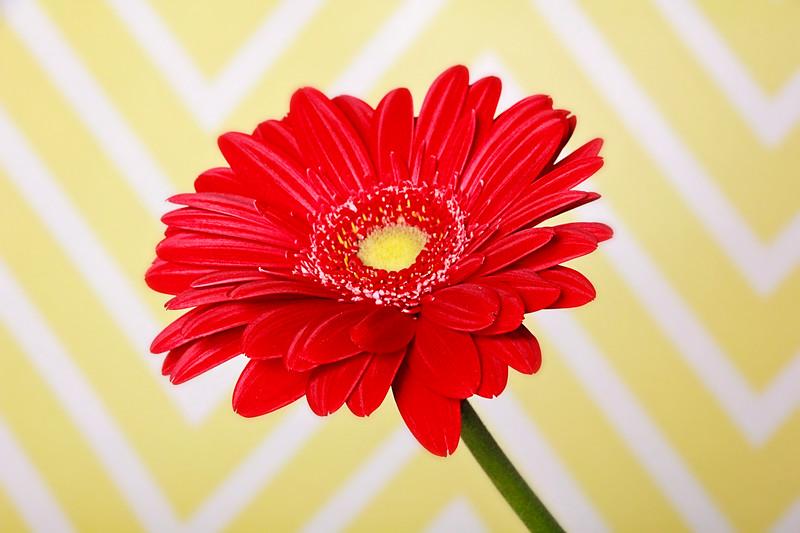 Flowers: In Studio