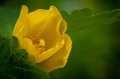 wildflower-7149