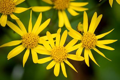 wildflower-7155