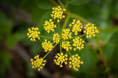wildflower-7181