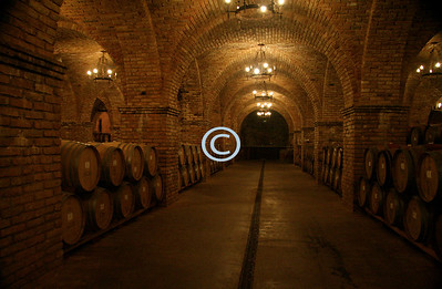 One of the many wine barrel rooms