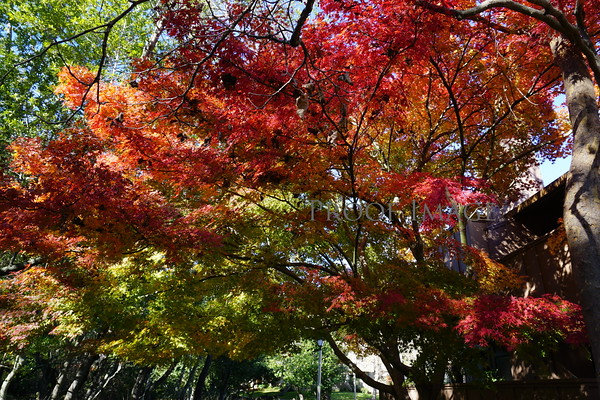 Fall In Pacheco