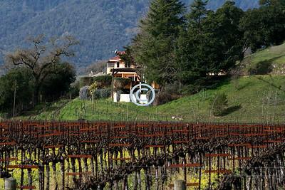 Napa Vineyard and Home