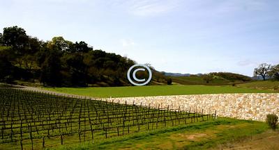 Stone Wall & Vineyard