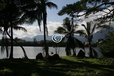 Hawaiian Fishpond & Garden